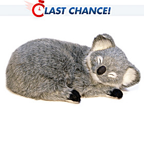 Sweet Dreams, Baby Koala Plush Animal